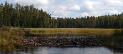 Beaver Dam. The lodge is in the left background.