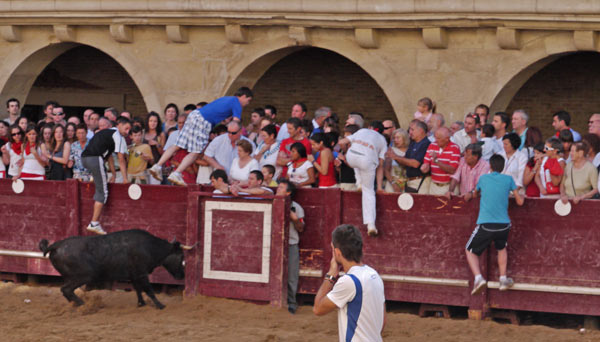 Tourists Taunt Bulls and Escape into Crowd