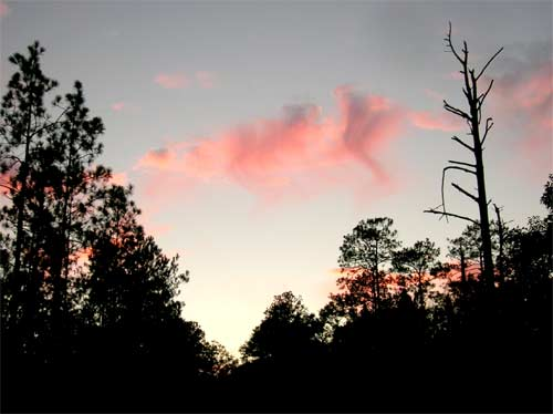 Sunset, Conecuh NF, Alabama, 2006