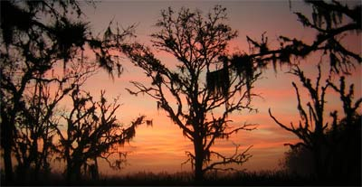 Sunrise in Boney Marsh. Florida, 2006