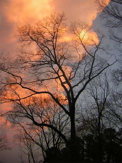 Naked tree silouetted against a sunset. Georgia